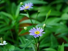 花2006175