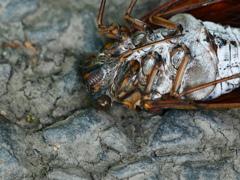 昆虫 2008243