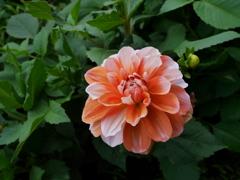 花 20062312