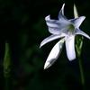 花 2007024