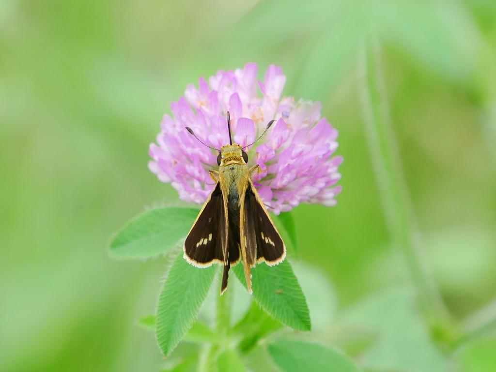 昆虫 2007133