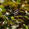 昆虫 2007317