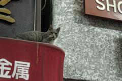 鶴見橋の猫