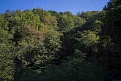 生駒山系 西斜面の植生