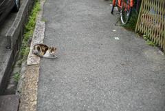 老いた三毛猫  --  IKUNO Streets