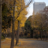 note :: 2017年大阪城公園 --2018年台風被害以前の風景
