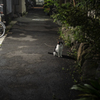 コウフクロン : 猫塚駐在猫