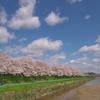 桜と川と青空