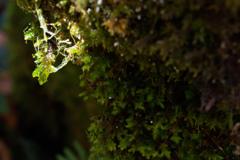 秋の木谷沢渓流 2