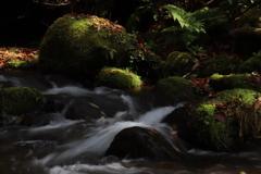 秋の木谷沢渓流