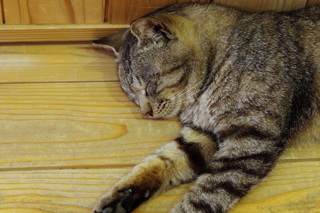 相島の猫8
