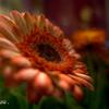 閉店後の花屋さん-1
