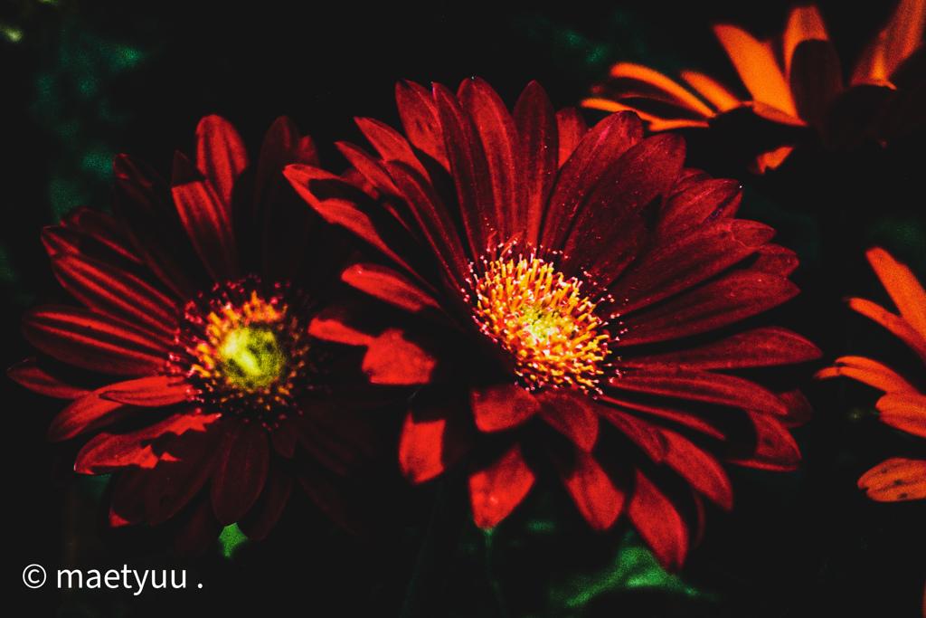 閉店後の花屋さん-2