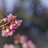 早めの開花