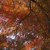 眼界に広がる紅葉