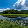 沼と木と空と…