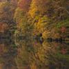 秋光の畔 2008鎌池