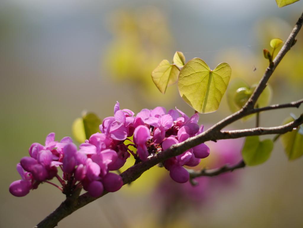 手賀沼の春(2)