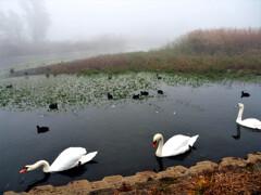 鳥たちの楽園