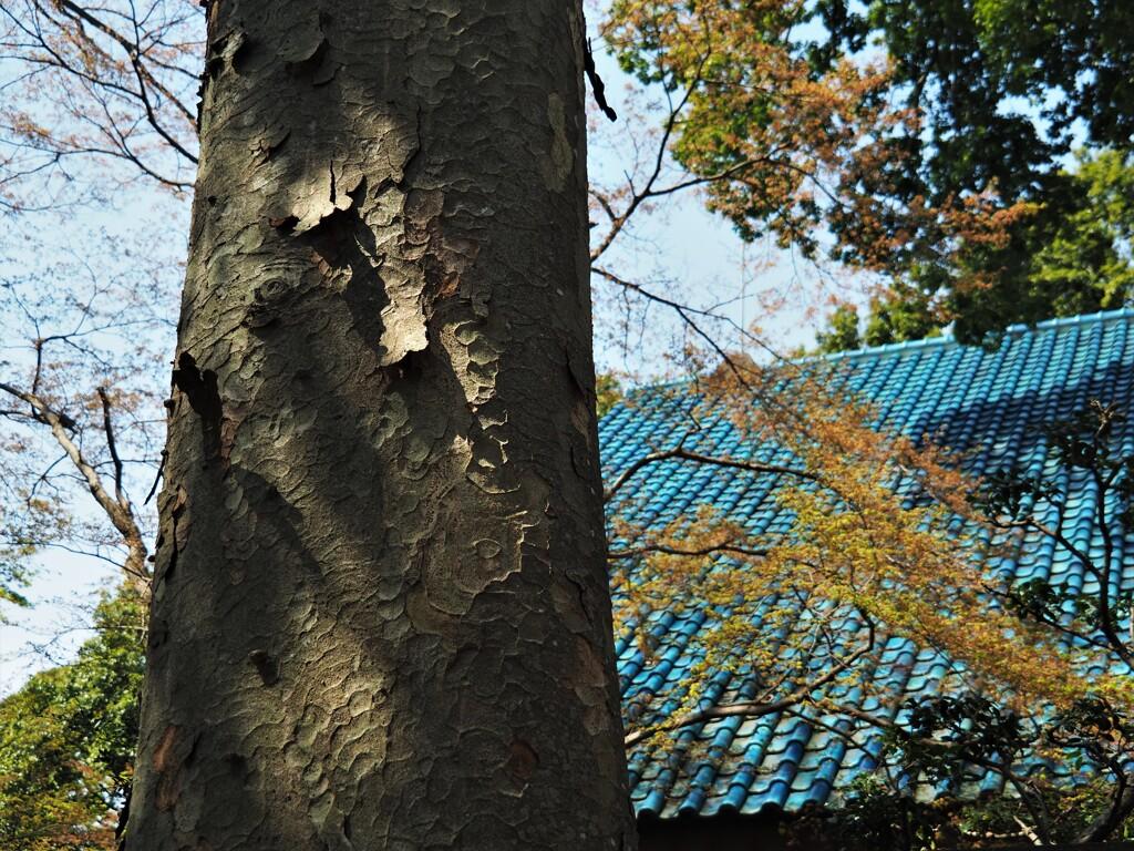シイの古木のある三樹荘