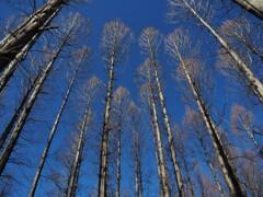 春を待つ木々