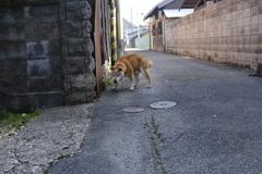 散歩の時間
