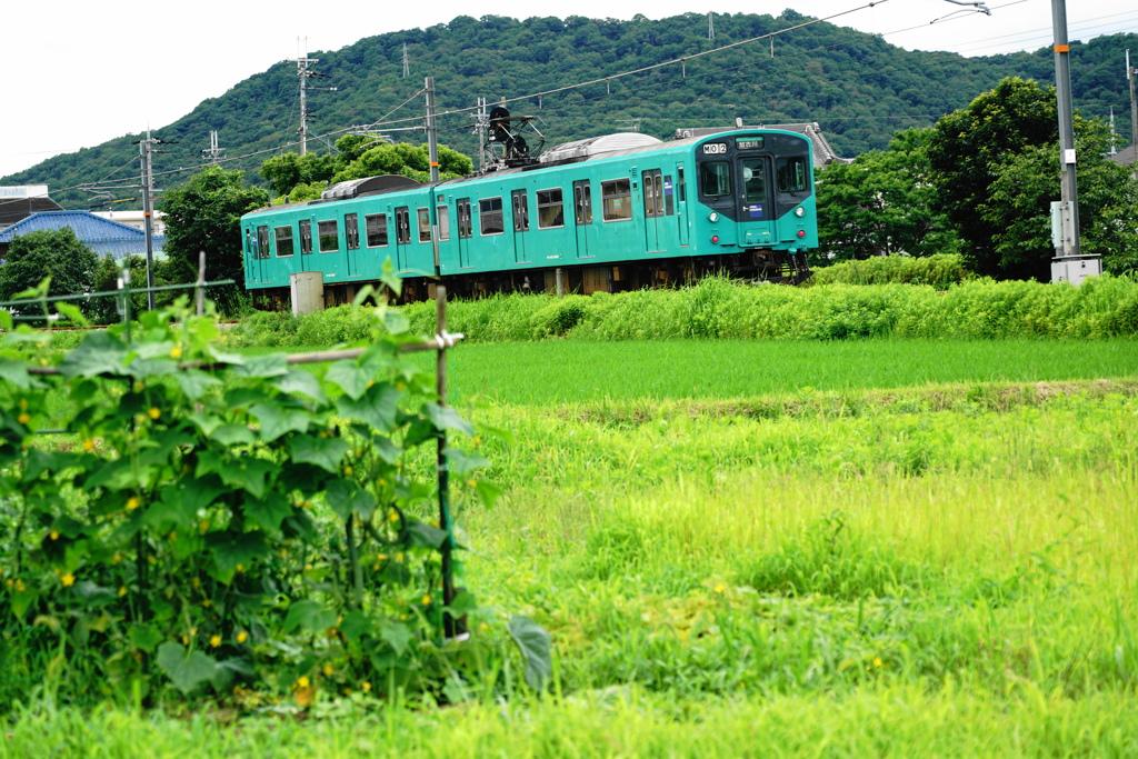 ローカル電車の風景