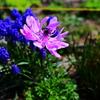 ブルー&桃色花