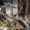 枯れ蔦な自転車