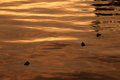 GoldenSlumbers