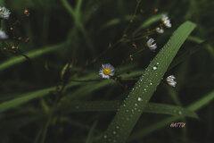 雨粒の囁き…