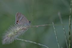 いつかの蝶と…