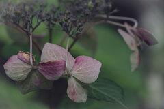 枯れ往く花が美を競う