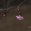 寒空にポツンと咲いた梅ひとつ