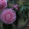 知らぬが花