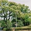 長良公園 1