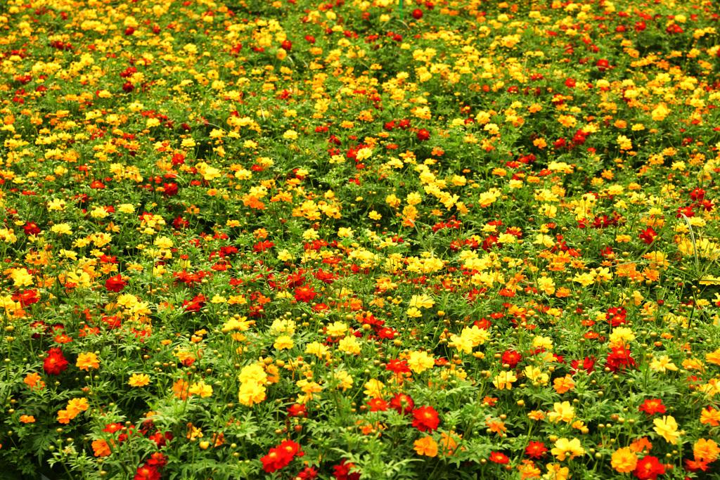 花フェスタ記念公園にて20200808 (2)