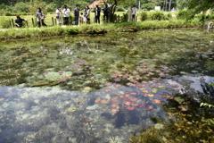 モネの池 (6)