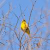 小鳥 (3)