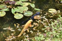 モネの池 (3)