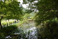 モネの池 (5)