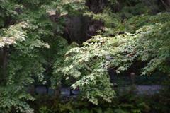 モネの池 (4)