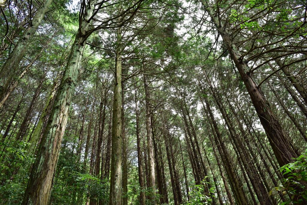 杉林 萩の滝 沿道