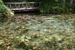 モネの池 (1)
