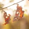 枯れ葉と陽