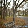 ベンチと枯葉