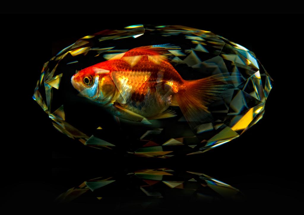 囚われ金魚