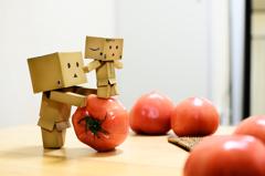 トマトころころお手伝い