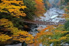 かずら橋の秋