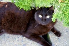 黒猫の休息